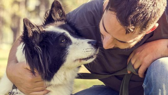 How to Find Products Necessary For Your Pet's Development